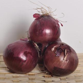 oignon-rouge