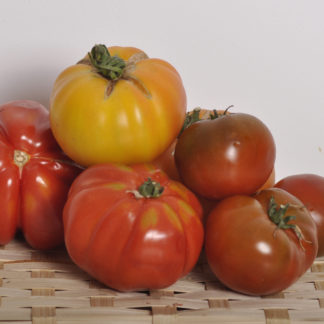 tomates-anciennes
